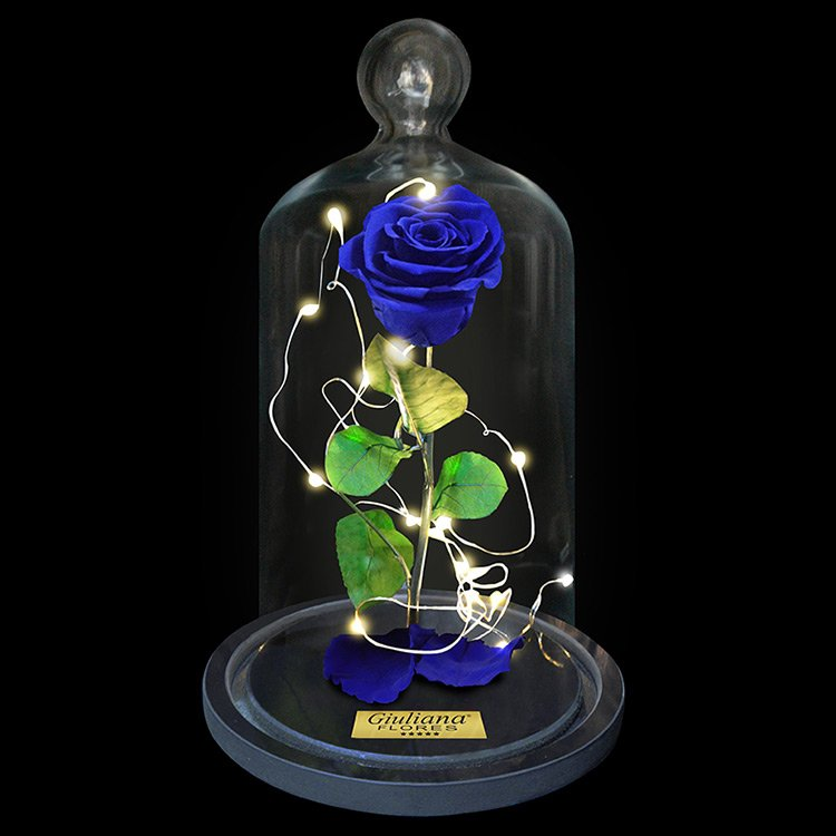 Rosa Encantada Stars Azul