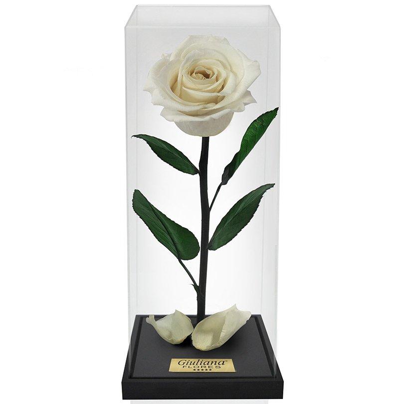 Rosa Encantada Box Branca