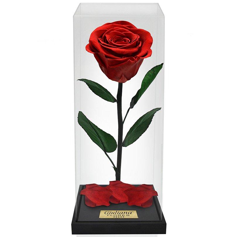 Rosa Encantada Box Vermelha
