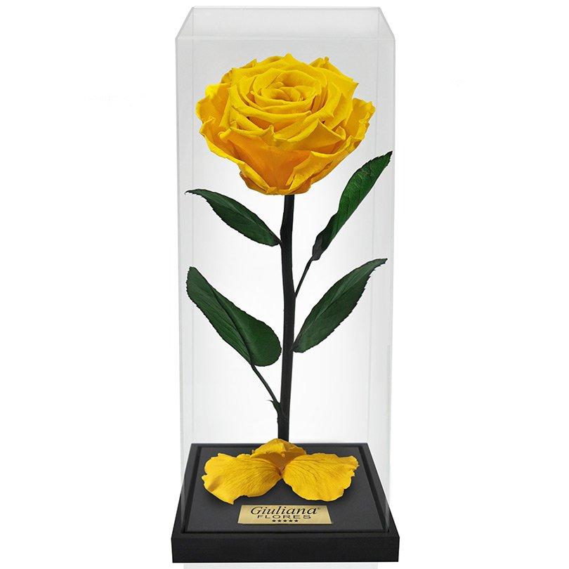 Rosa Encantada Box Amarela