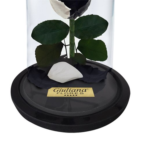 Mini Rosa Encantada Black Moon