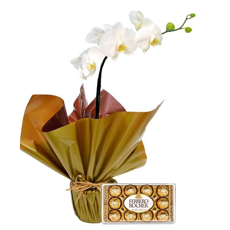 Orquídea Phalaenopsis Plantada e Ferrero
