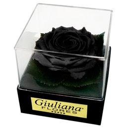 Caixa Acrílica com Rosa Encantada Preta