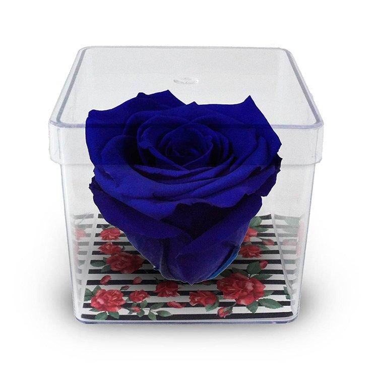 Rosa Encantada Azul Escuro no Acetato