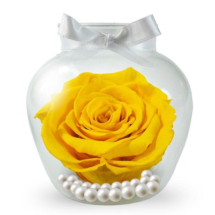 Rosa Amarela Encantada no Vaso
