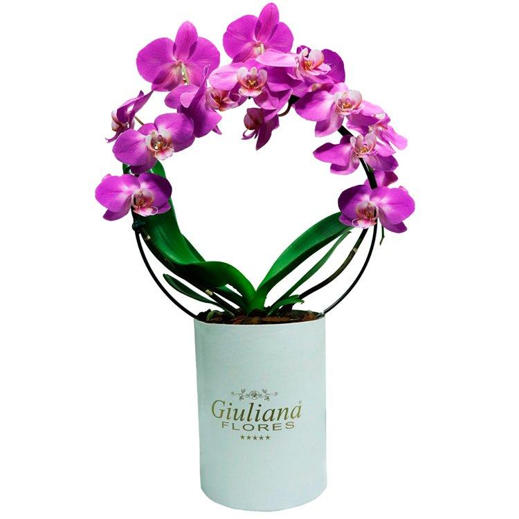 Orquídea Phalaenopsis Pink em Arco