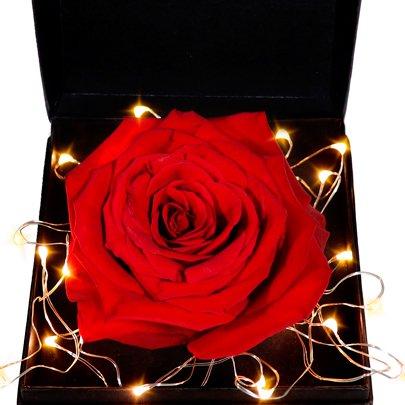 Caixa Premium com Rosa Colombiana Vermelha Star