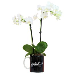 Mini Orquídea Rara Branca na Caneca Gratidão