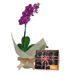 Mini Orquídea Rara Lilás e Brigadeiros