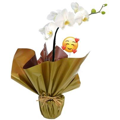 Orquidea Phalaenopsis Plantada Emoji Coraçãozinho
