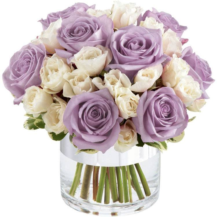 CElegante de Rosas Lilás